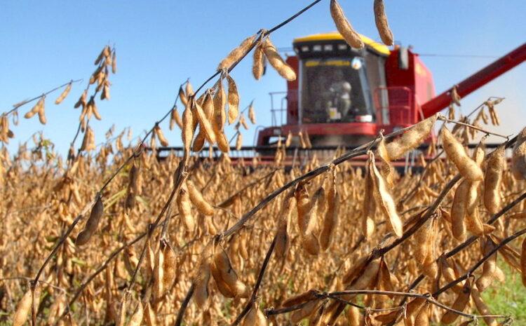 Precio de la soja paraguaya sube 5% en la semana para la nueva zafra